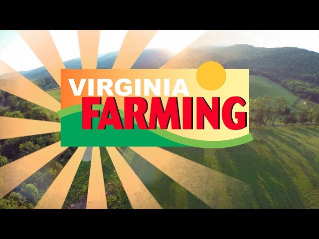 Virginia Farming: Lavender Farm