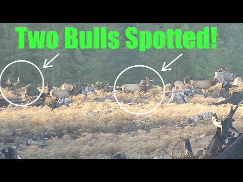 Two BIG Oregon Roosevelt BULLS SPOTTED AND STALKED! Ep 7