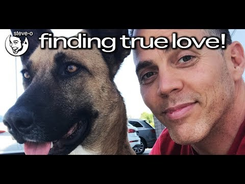 Steve-O visits Peru and finds a street dog who goes on to become his best friend