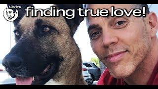 Cerita Steve-O Mengadopsi Anjing Jalanan