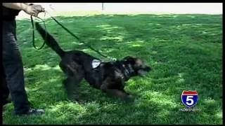 Jun 8, 2016 ... Ten year old Klamath Falls girl recovering from dog attack - Duration: 1:01. ... 1:n10 · Adorable police puppy in training pounces on officer's leg ...