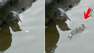 Video Direkam Diam-diam!! Siap² Kaget!! Saat Melihat Cara Unik Burung ini Mancing ikan! Perhatikan! MP3, 3GP, MP4, WEBM, AVI, FLV Februari 2019