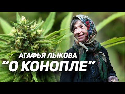 Агафья Лыкова 2019. Рассказ о конопле