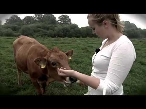 Landwirtschaft im Emsland