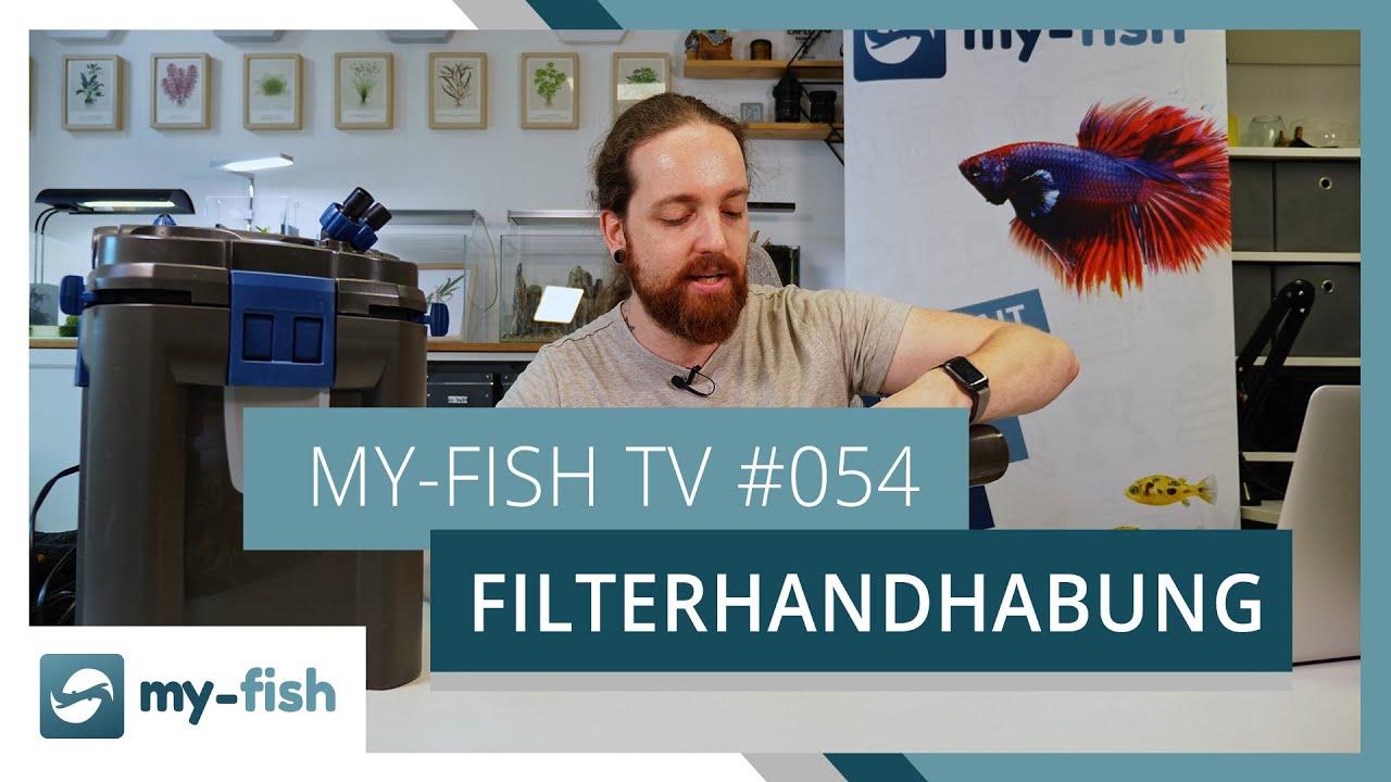 my-fish TV - Deine Nr. 1 Anlaufstelle für alle Themen rund um die Aquaristik 10