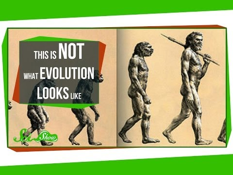 Not - Hank explains where that over-simplified image of evolution comes from and what it is actually supposed to mean. Like SciShow? Want to help support us, and a...