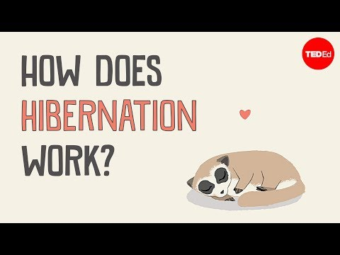 What's the difference between hibernation and sleep? - Sheena Lee Faherty