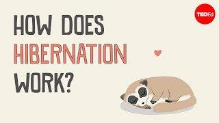 How does hibernation work? - Sheena Lee Faherty