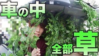 【検証】もし車の中が草だらけだったら持ち主は草生えるのか?