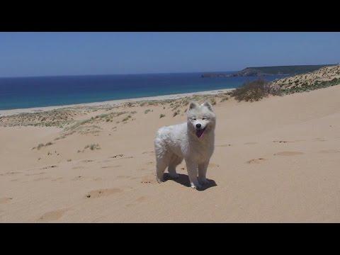 Dune di Pistis Sardegna