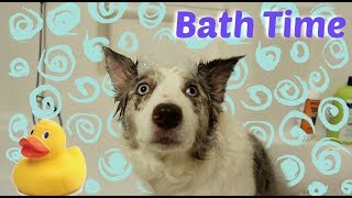 Giving My Dog A Bubble Bath | VLOGMAS DAY 2 by Maddie Smith