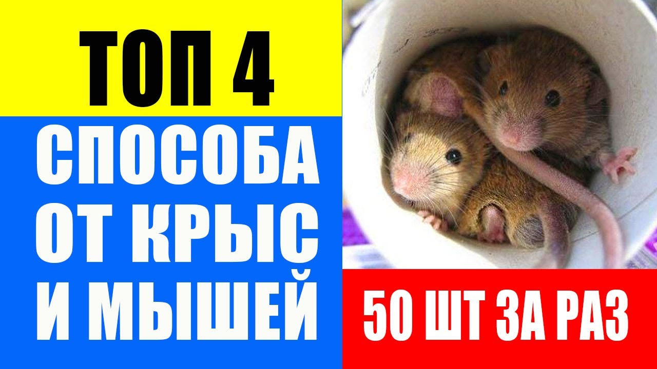 Как избавиться от мышей: мышеловка своими руками