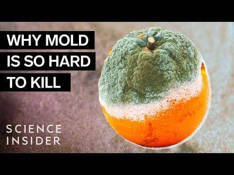 Why Mold Is So Hard To Kill