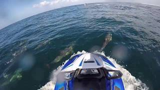 10. 2017 Yamaha GP1800 & FX SVHO Cruiser Playing with Dolphins