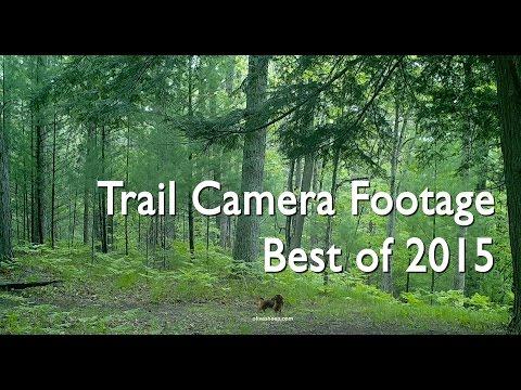 Trail Camera Footage - Best of 2015 (видео)