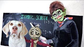 Zombie Boy & Cute Dogs Play: Funny Dogs Maymo & Potpie by Maymo