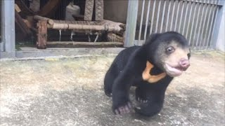 Video Rescued Bear Cub Has Greatest Reaction to New Playground MP3, 3GP, MP4, WEBM, AVI, FLV Juni 2017