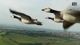 Download Video Apa yang Terjadi Jika Burung Masuk ke Mesin Pesawat ? MP3 3GP MP4