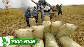 GDP ngành nông nghiệp 9 tháng đầu năm tăng 3,65%