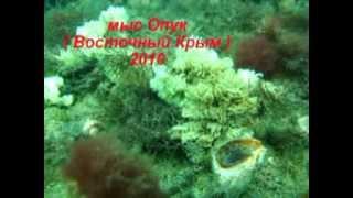 Хроники катастрофы ( Рапана, Черное море )