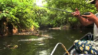 Video Papuan Black Bass Fishing part-2 with Gong Lei MP3, 3GP, MP4, WEBM, AVI, FLV Oktober 2018