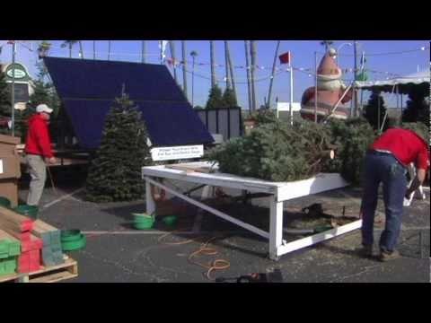 Lote de Árboles de Navidad que usa Energía Solar