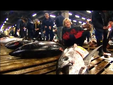 Video Largest fish market in the world - Blue Planet Deep Trouble - BBC download in MP3, 3GP, MP4, WEBM, AVI, FLV January 2017