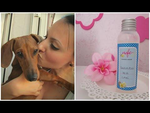shampoo naturale per cani, fai da te!