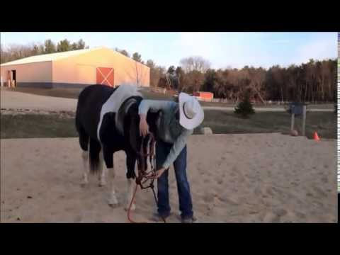 How to FIX a hard to bridle horse..