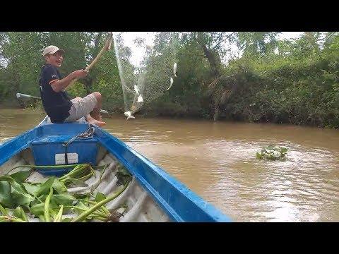 Vớt cá (P1) Nước mới lớn cá ăn liên tục vớt không kịp luôn | Săn bắt SÓC TRĂNG | - Thời lượng: 26:00.