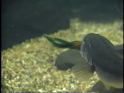 Best Fishing Lures from www.bassfishingluresonline.com