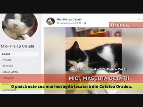 Mici, mascota Cetății Oradea