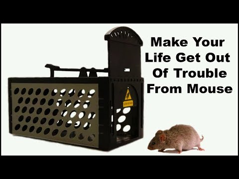 """Make Your Life Get Out Of Trouble From Mouse"" Mousetrap Monday"