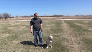 Teaching a Dog to Come Chicago Dog Training