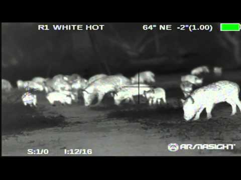 Hog Hunting Night Vision vs. Thermal Gear - Armasight Sneak Peek