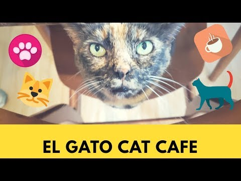 EL GATO CAT CAFE / Houston, TX