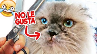 La Reacción de mi Gato al CORTARSE EL PELO