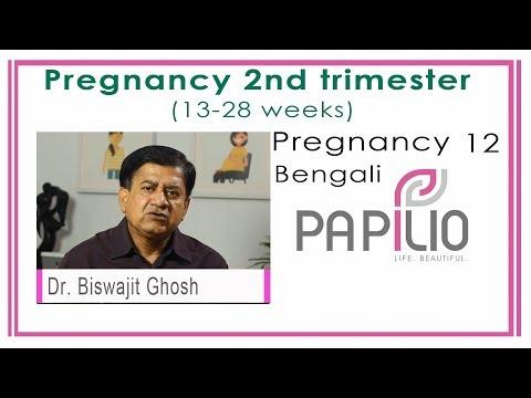 (Second Trimester Pregnancy 13-28 weeks. Pregnancy Bengali 12 - Duration: 103 seconds.)