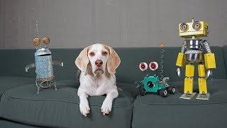 Dogs vs Steampunk Robot War: Funny Dogs Maymo, Potpie, & Penny by Maymo
