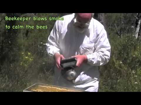 Australian Beekeeper Propolis