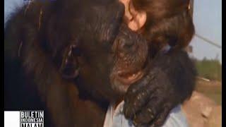 Video Mengharukan! Simpanse peluk wanita yang menyelamatkannya 25 tahun lalu - BIM 10/06 MP3, 3GP, MP4, WEBM, AVI, FLV Juli 2018