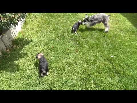 Puppies 4