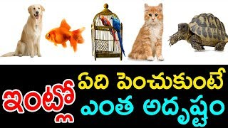 Video ఇంట్లో ఏవి పెంచుకుంటే ఎంత అదృష్టం || What Type of pets We Growup in Home for Lucky & Safety MP3, 3GP, MP4, WEBM, AVI, FLV Maret 2019