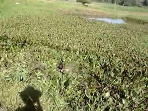Rampa na Lagoa - la em Ilhota