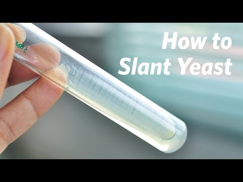 How To Slant Yeast Cultures – Craft Brewing™