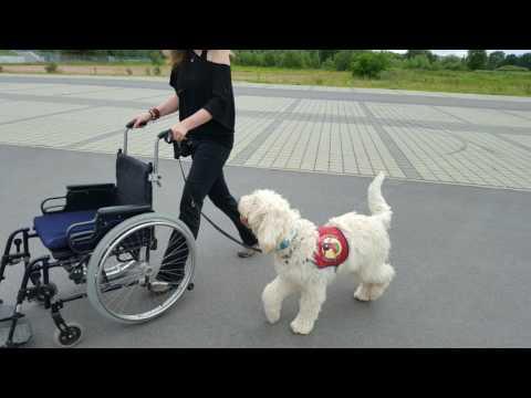Rollstuhl Training mit Liam, Eddy & Meiko