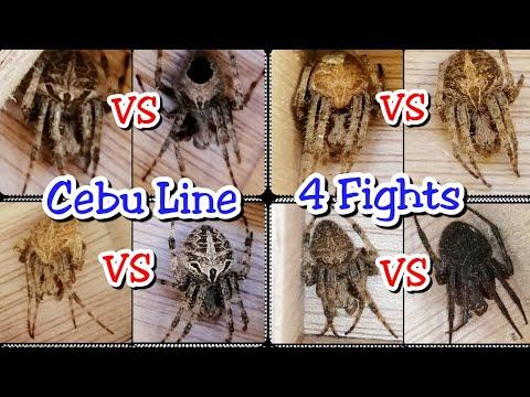 Laban ng Gagamba - Cebu Line | 4 Fights | Epic Fights