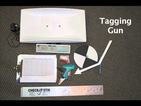 Fish Tagging Kits