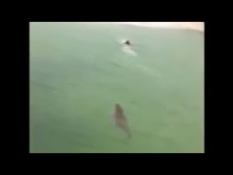 crocodile - A boy swimming in Sian Ka'an in Mexico must be thanking his lucky stars after fast-thinking witnesses narrowly managed to save him from the jaws of an enormous crocodile. ------------------------...