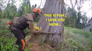 Video CUTTING DOWN A HUGE DEAD CEDAR TREE MP3, 3GP, MP4, WEBM, AVI, FLV September 2019